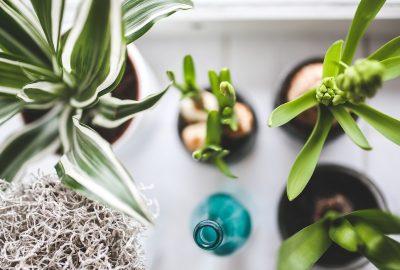 การย้ายพืชจะย้ายพืชหรือไม่?